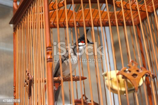 istock Red-whiskered 475851616