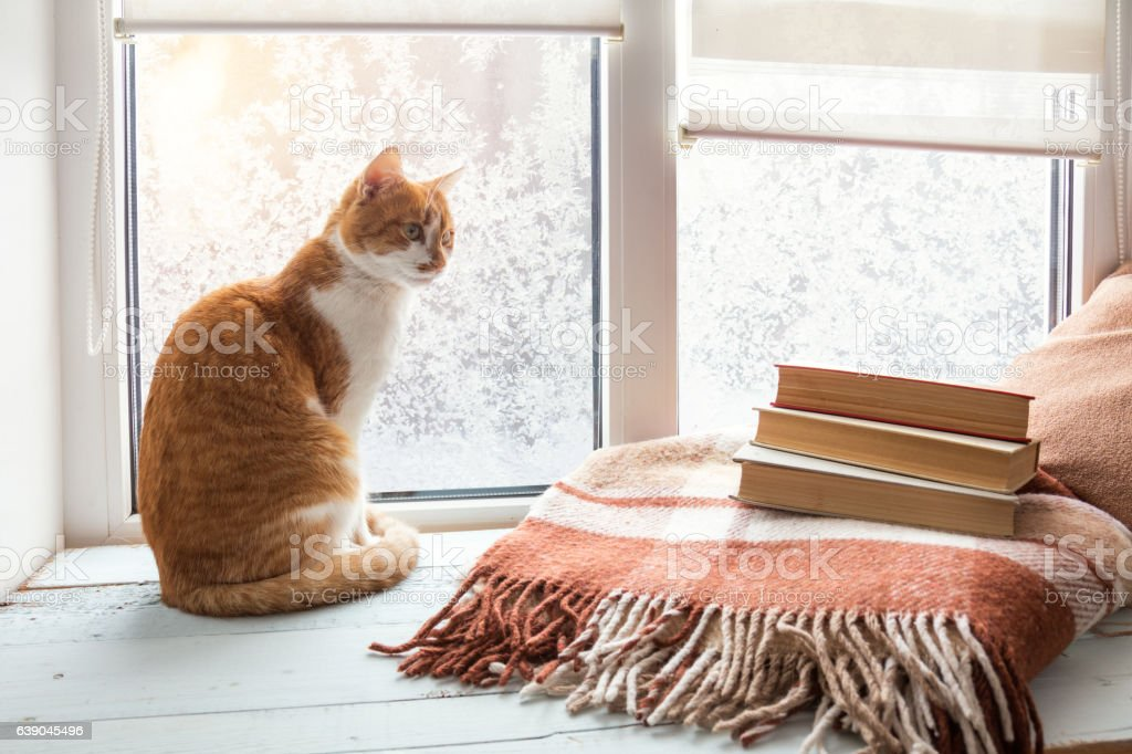 Red-white cat on windowsill stock photo