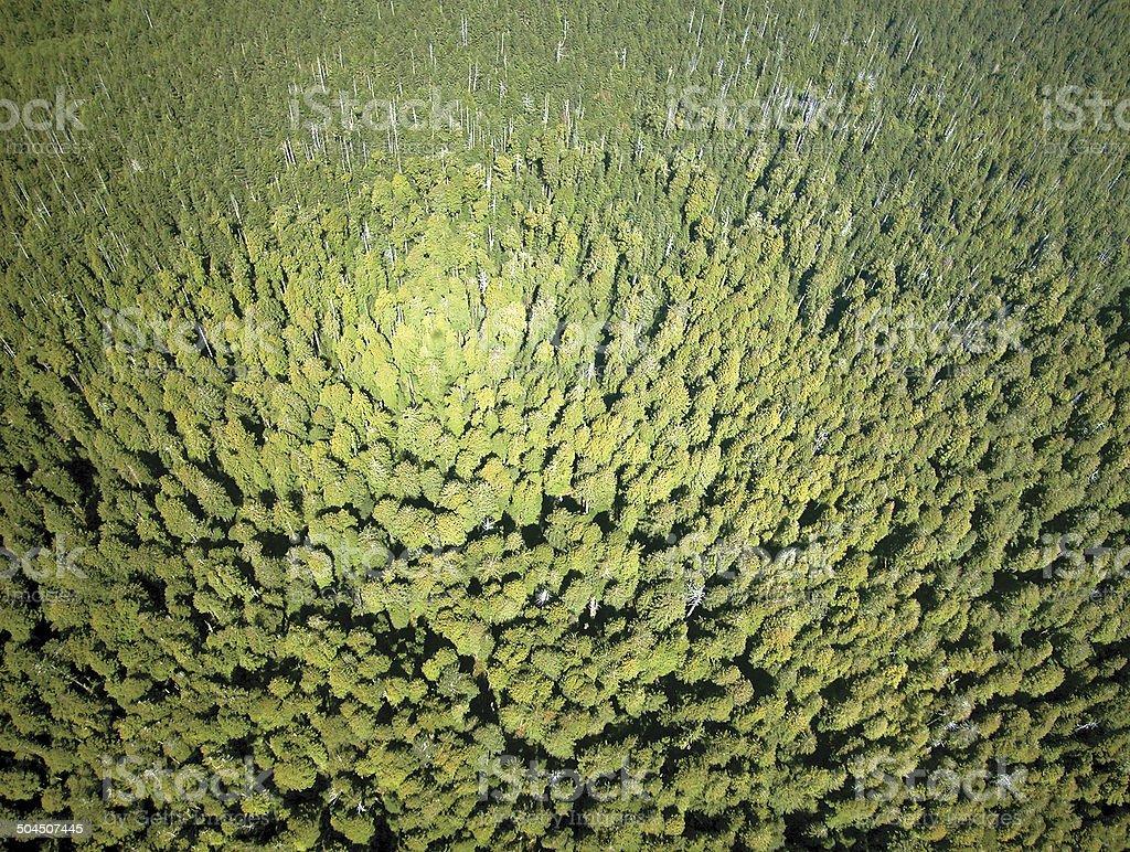 Redwood Aerial stock photo