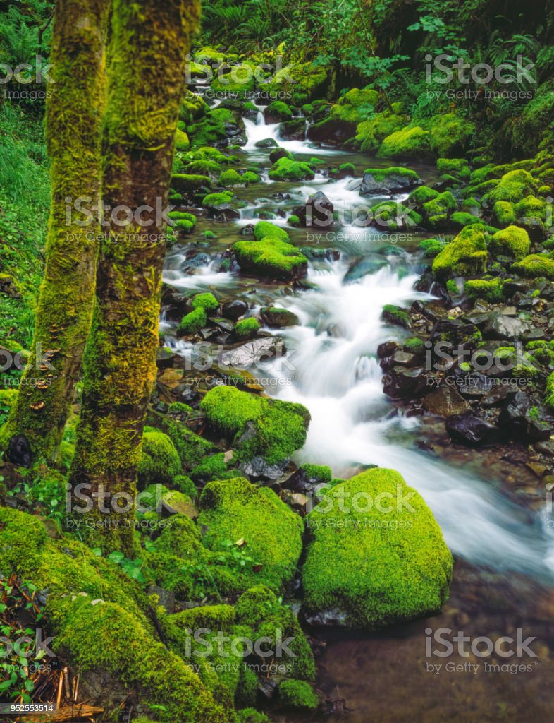 Redwood Creek in der Nähe von Brookings in Siskiyou National Forest, Oregon – Foto