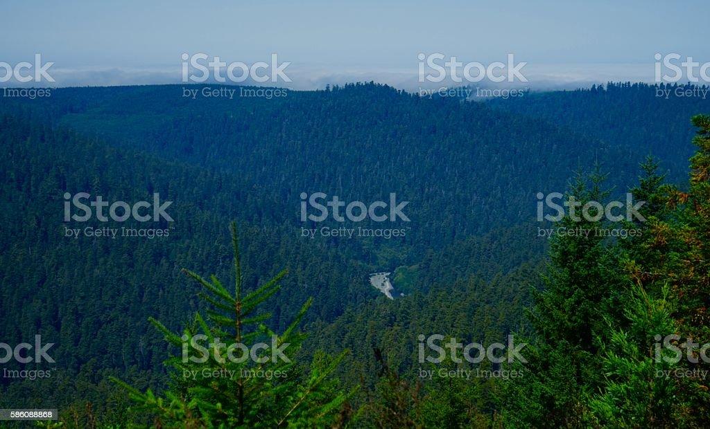 Redwood Creek View stock photo