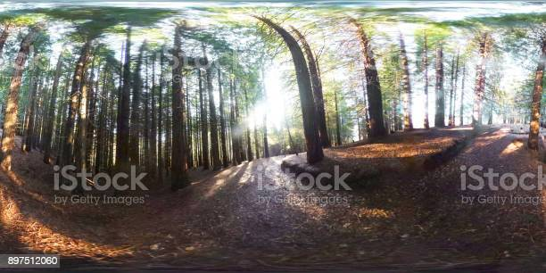 Redwood forest 360degree view picture id897512060?b=1&k=6&m=897512060&s=612x612&h=ovwsrnhsnvradh8jb5gwio6dzakkubqnxj1ajp3qav8=