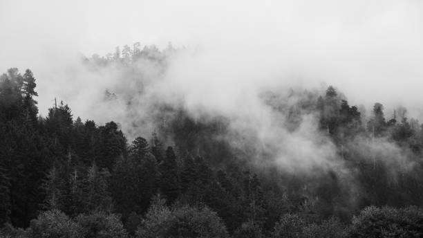 Redwood Forest Landschaft im schönen Nordkalifornien – Foto