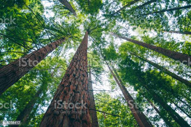 Photo of Redwood forest