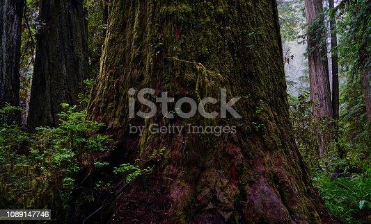 Northwest California's Redwood National Park. Prairie Creek Redwoods State Park.