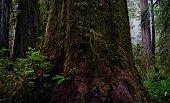 Northwest California's Redwood National Park.\nPrairie Creek Redwoods State Park.