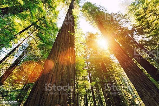Photo of Redwood National Park