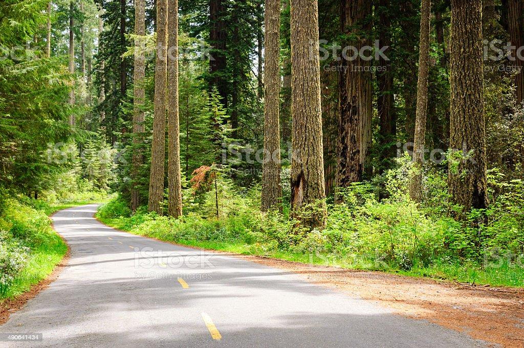 Redwood National Park stock photo