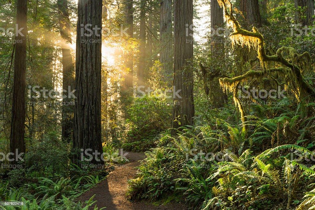 Parque Nacional de Redwood - foto de acervo