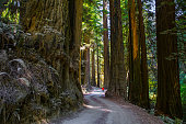 Redwood State and National Park near Crescent City, California.