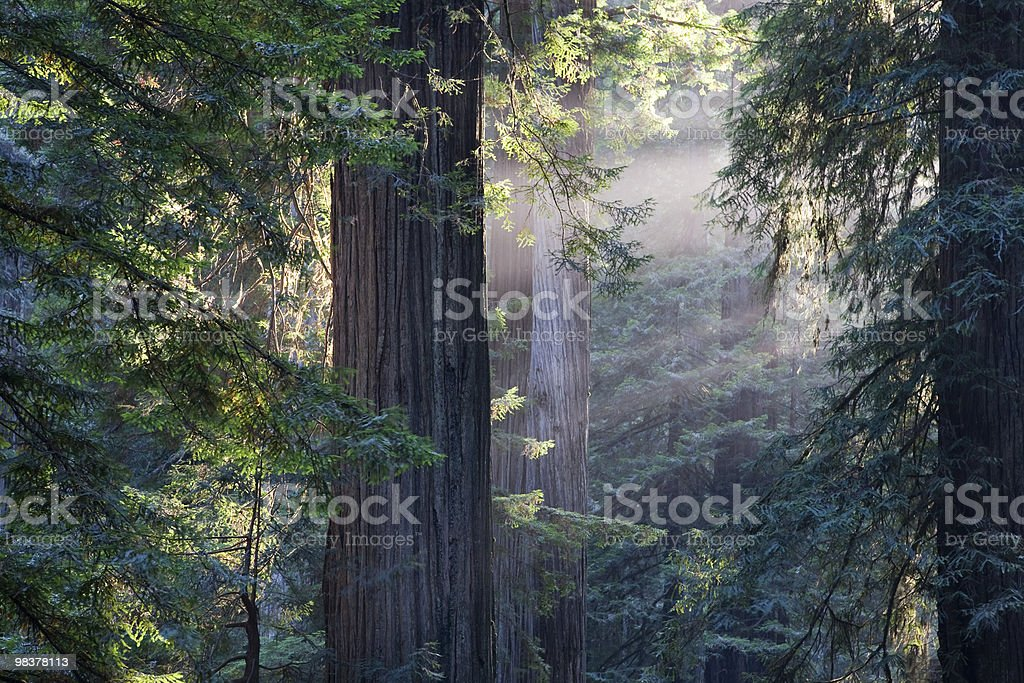 Redwood National Park royalty-free stock photo