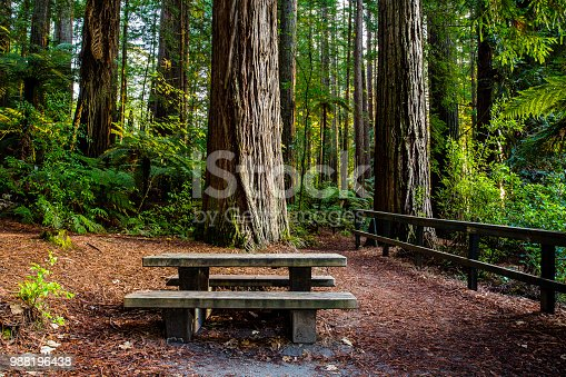 Picnic table under a Redwood tree