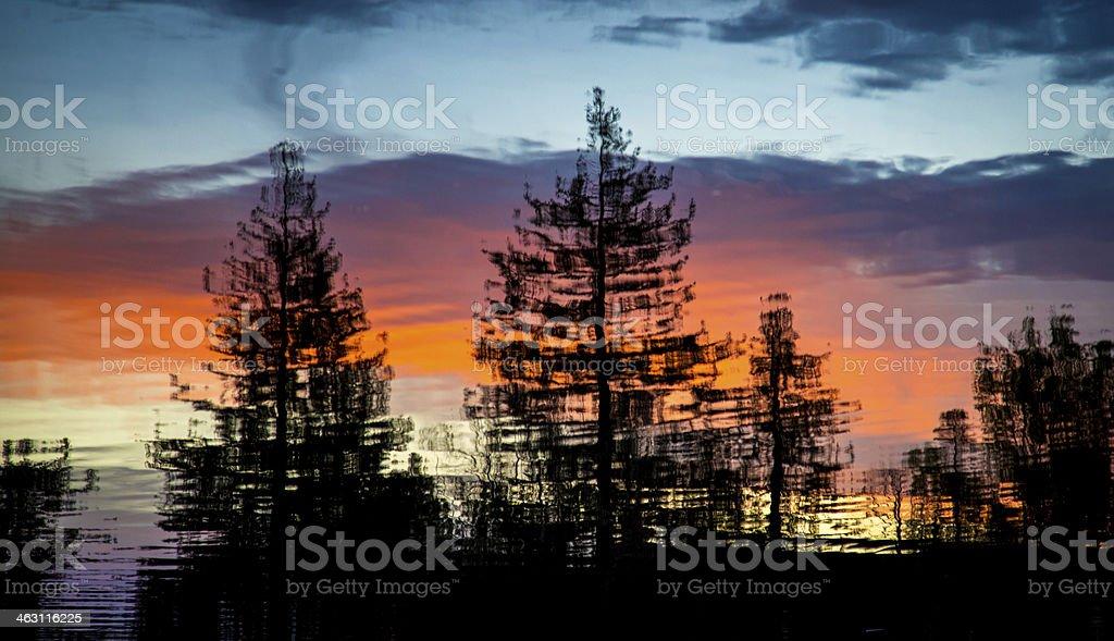 Redwood Sunset Reflections stock photo