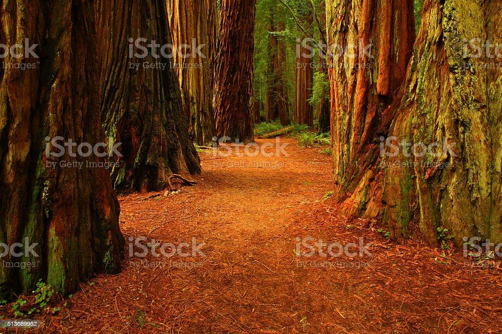 Redwood Trees, Stout Grove, Jedediah Smith Redwoods State Park,California stock photo