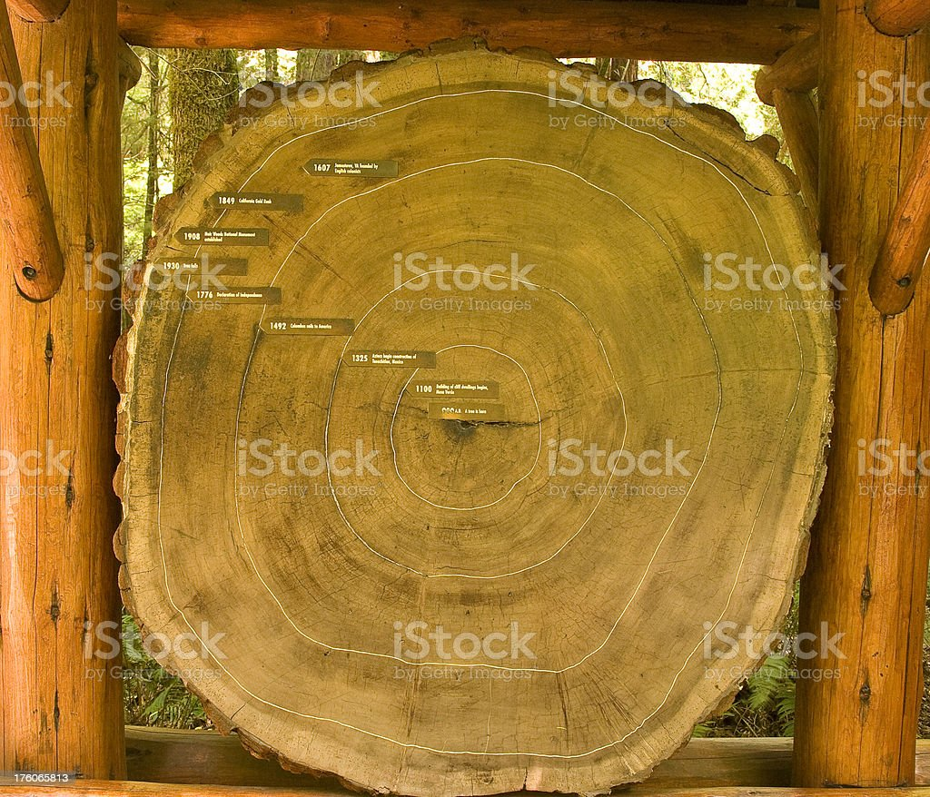 Redwood Trunk Cross-Section from a 960 A.D. Tree stock photo