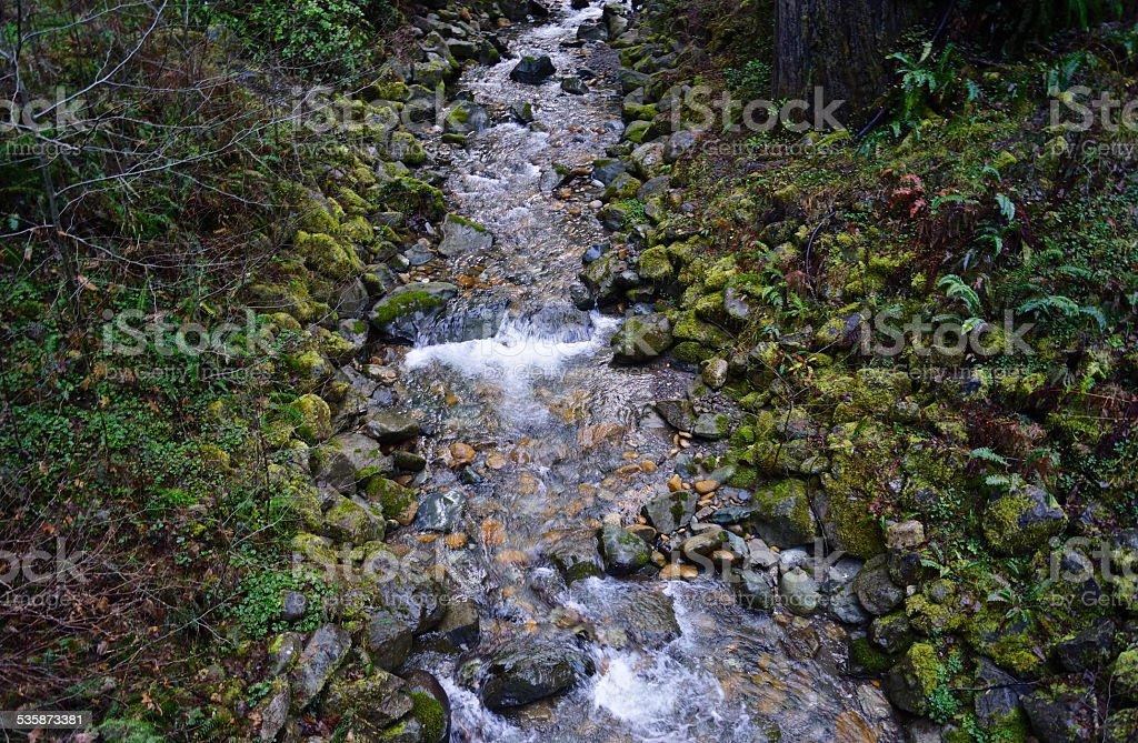 Redwood Unrolling Stones stock photo