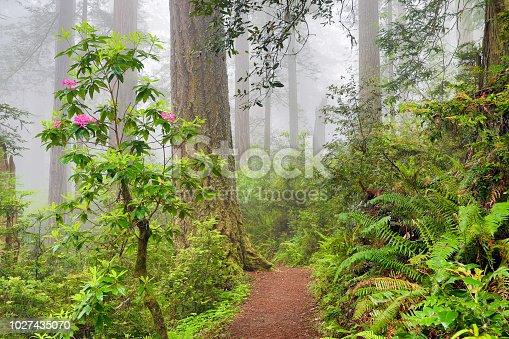 Del Norte Coast Redwoods State Park, California, USA