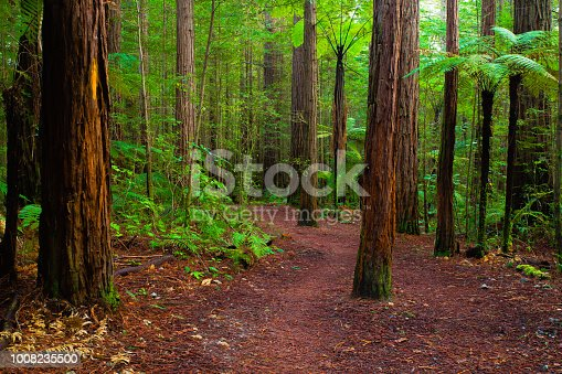 Tourist path through the Redwoods Forest in Rotorua
