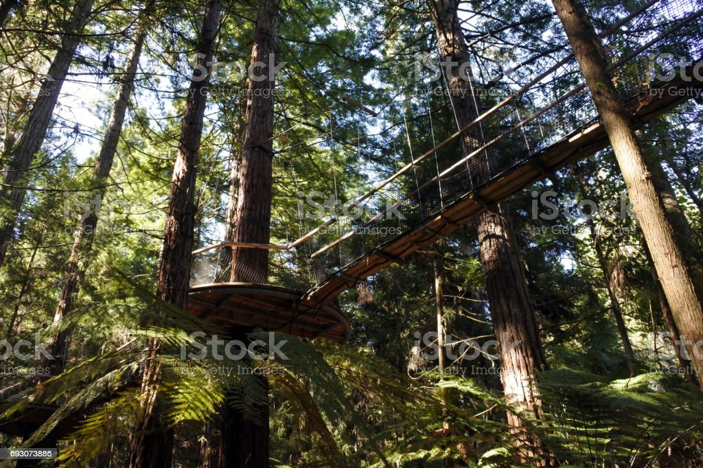 Redwoods Treewalk at Giant Redwoods forests in Rotorua New Zealand stock photo