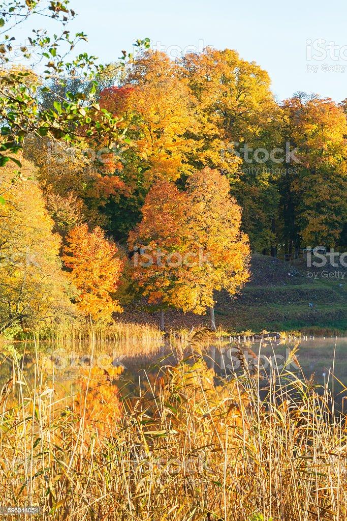 Reed at a lake royalty-free stock photo