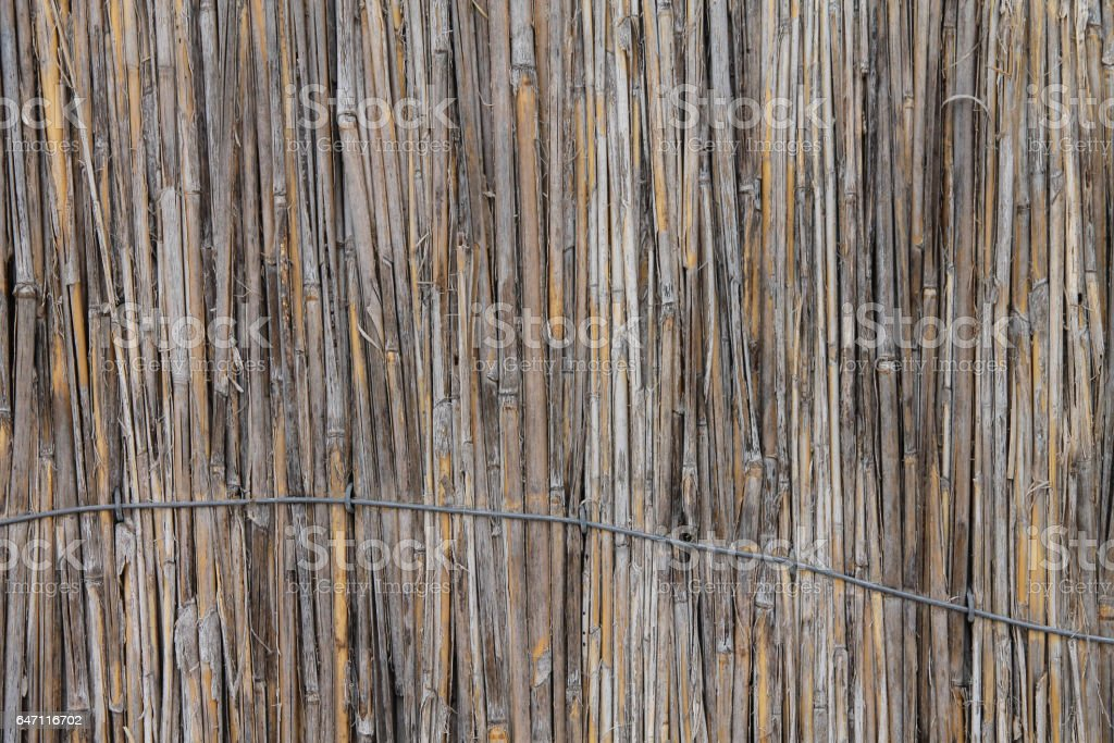 reed background stock photo