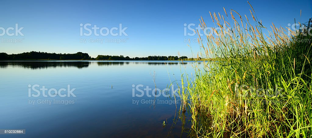 Reed by Calm Lake under Blue Sky in Summer Landscape stock photo