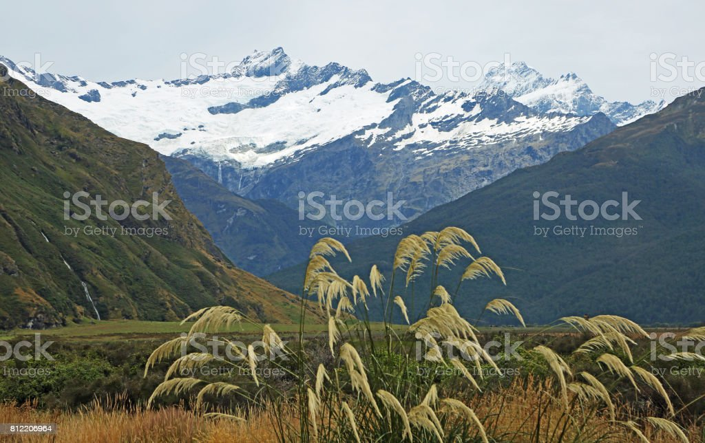 Reed in Mt Aspiring NP stock photo