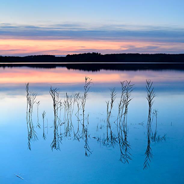 reed auf den ruhigen see inmitten der wald bei sonnenuntergang - nationalpark müritz stock-fotos und bilder