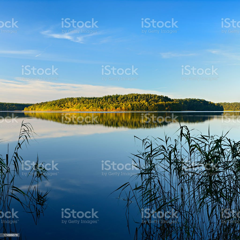 Reed on Calm Lake amongst the Woods royalty-free stock photo