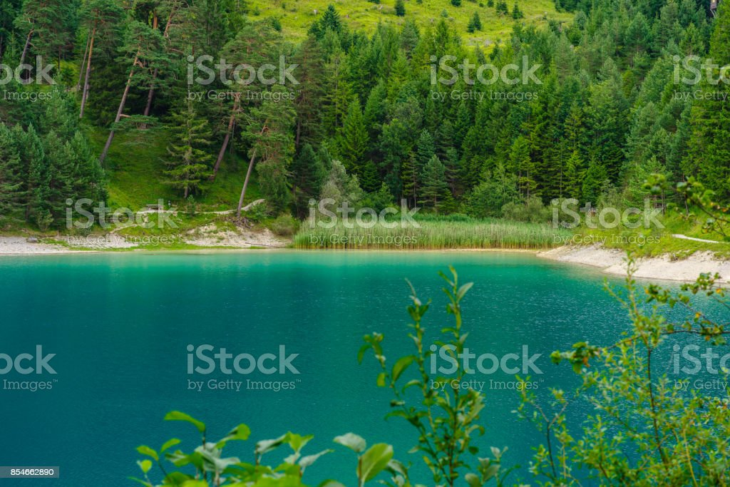 Reed on the banks of the Urisee stock photo