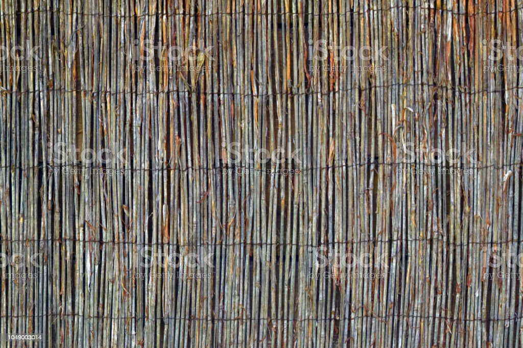 Reed texture stock photo