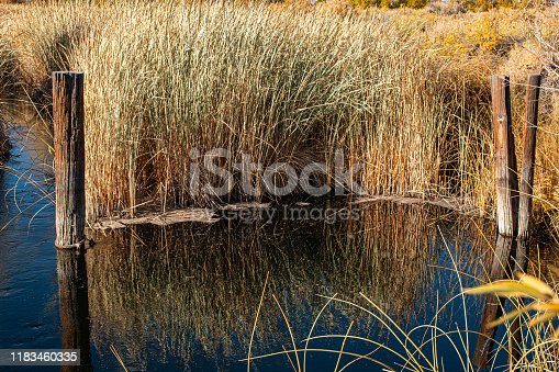 Reeds and wooden posts in a river.