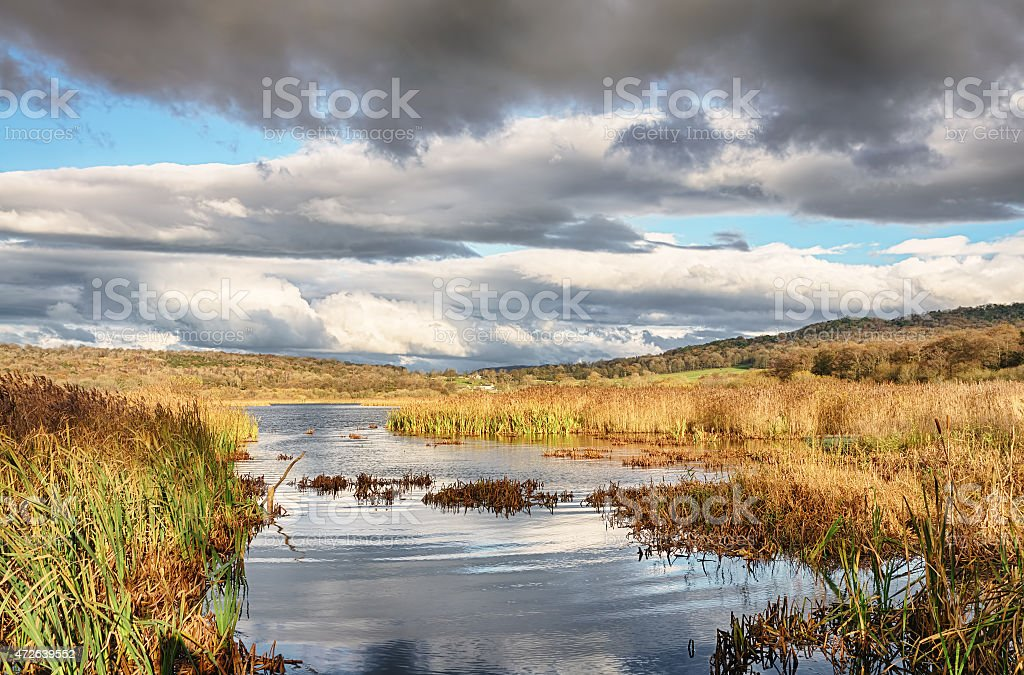 Reeds and water at Leighton Moss, Lancashire stock photo