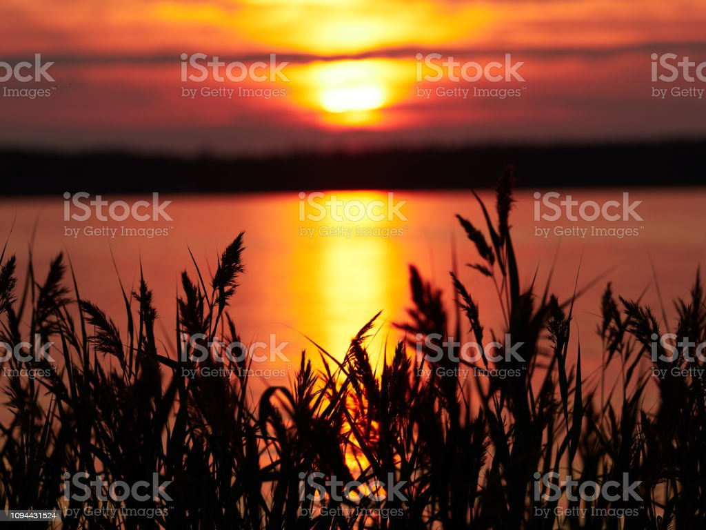 Reeds at sunset in a beautiful seascape stock photo