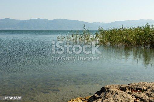 reeds growing along the shore of Lake Iznik