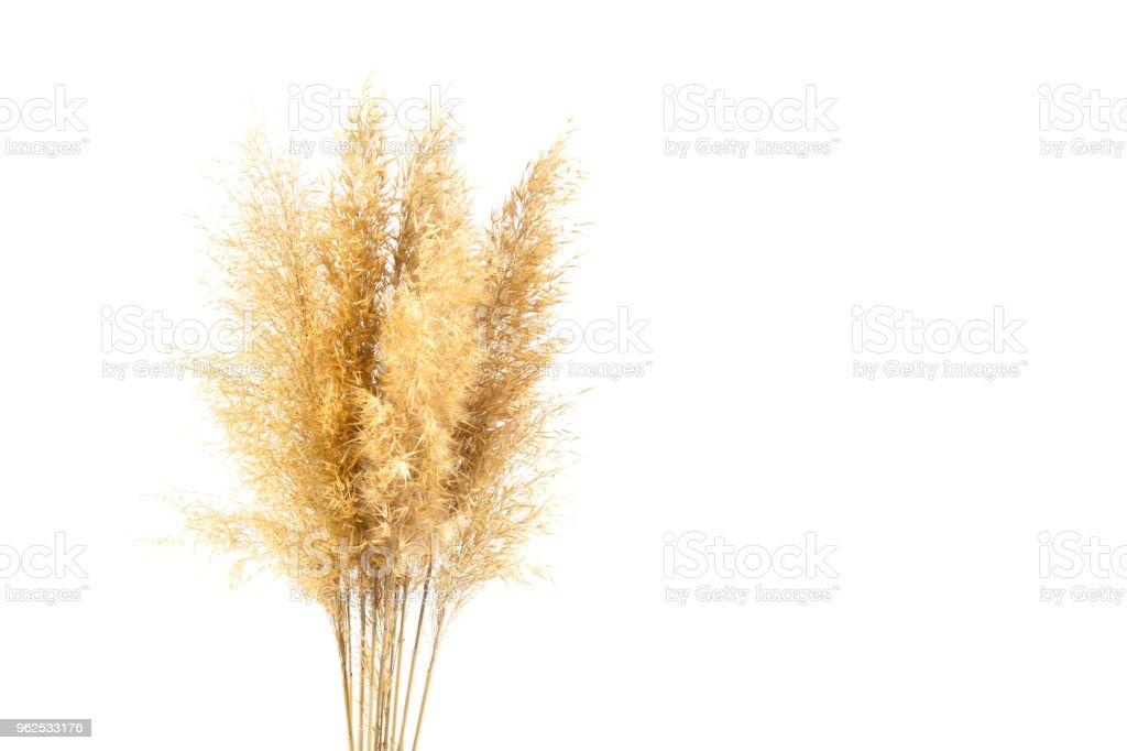 """reeds, isolada no branco """" - Foto de stock de Alto - Descrição Geral royalty-free"""