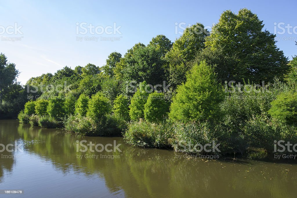 Reeds near canal in park, Amsterdam, the Netherlands royalty-free stock photo