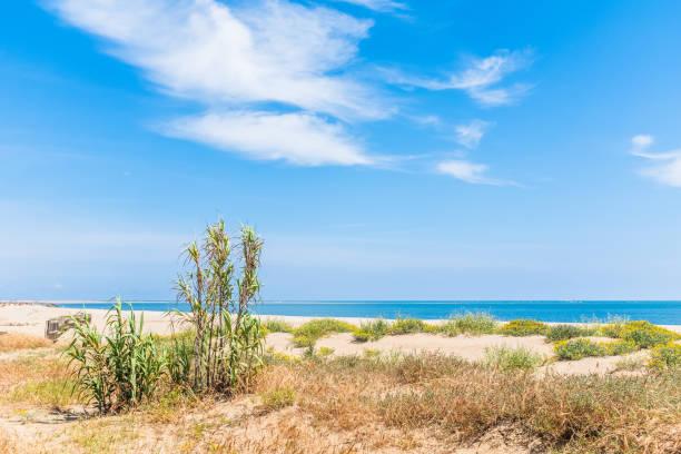 Schilf auf den Sanddünen Isla Canela, Andalusien, Spanien – Foto