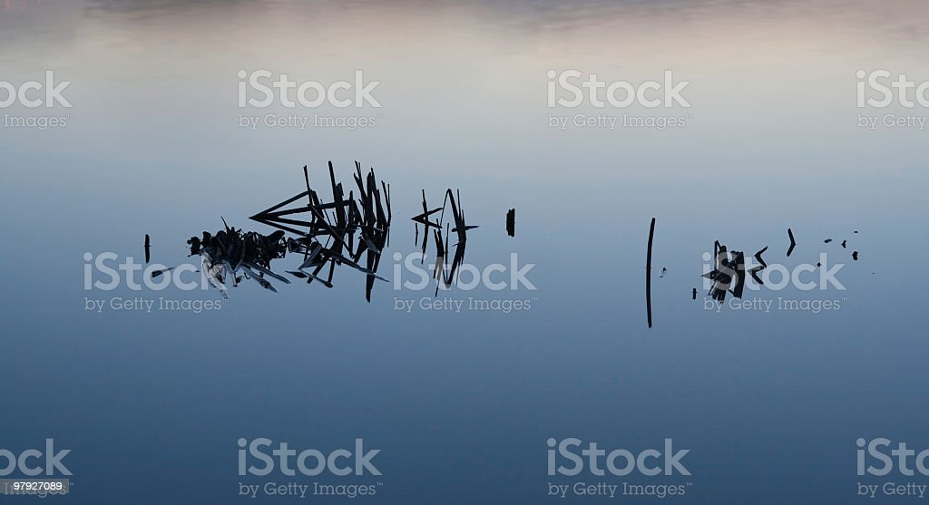 Reeds royalty-free stock photo