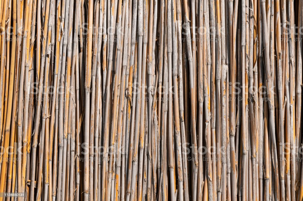 Reeds Wall Texture Background stock photo