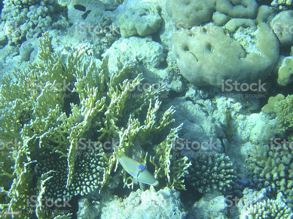 Reef and Fish royalty-free stock photo