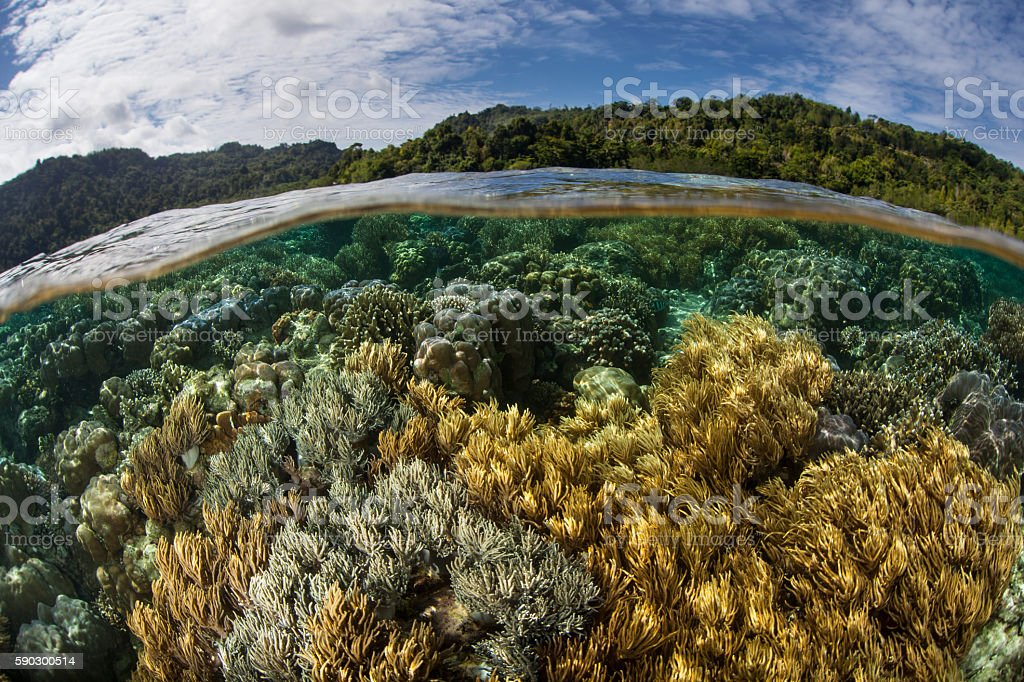 Reef Biodiversity in Indonesia royaltyfri bildbanksbilder
