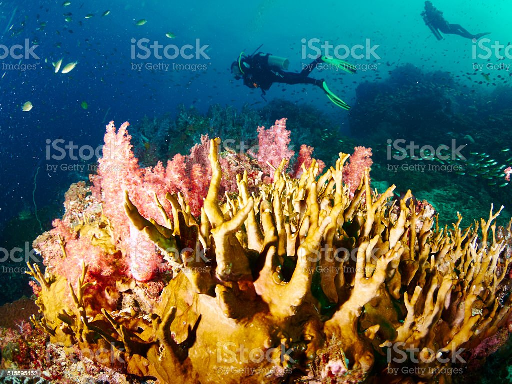 reef coral and reef fish stock photo
