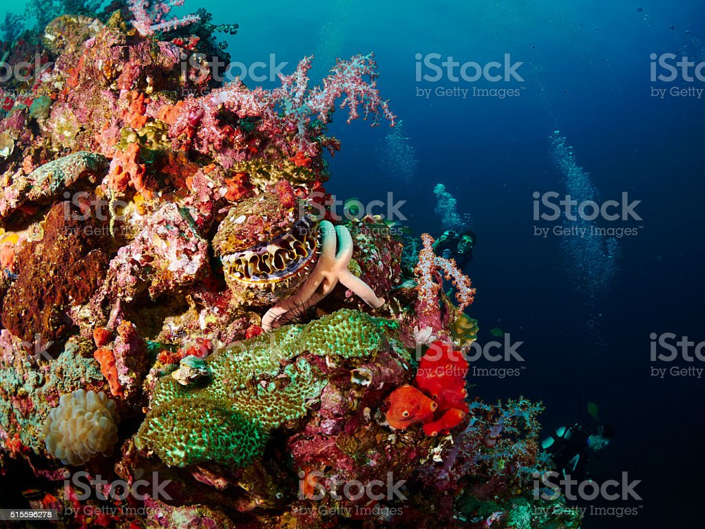 reef coral and reef fish with seastar stock photo