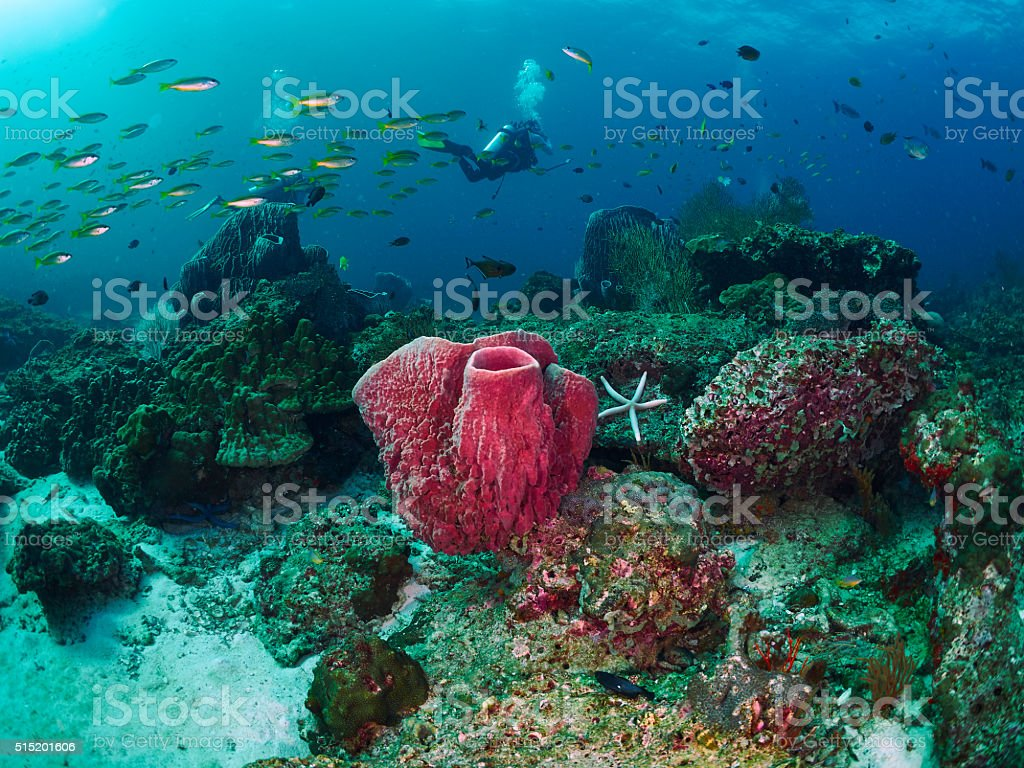 reef coral stock photo