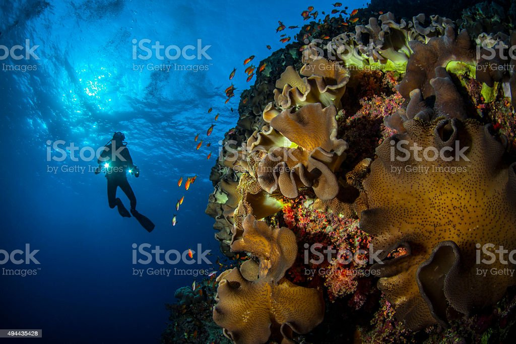 Reef Diving stock photo
