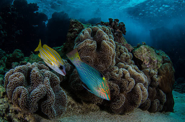 Reef fish red sea stock photo