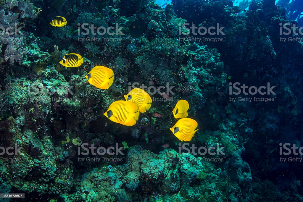 Reef fishes stock photo