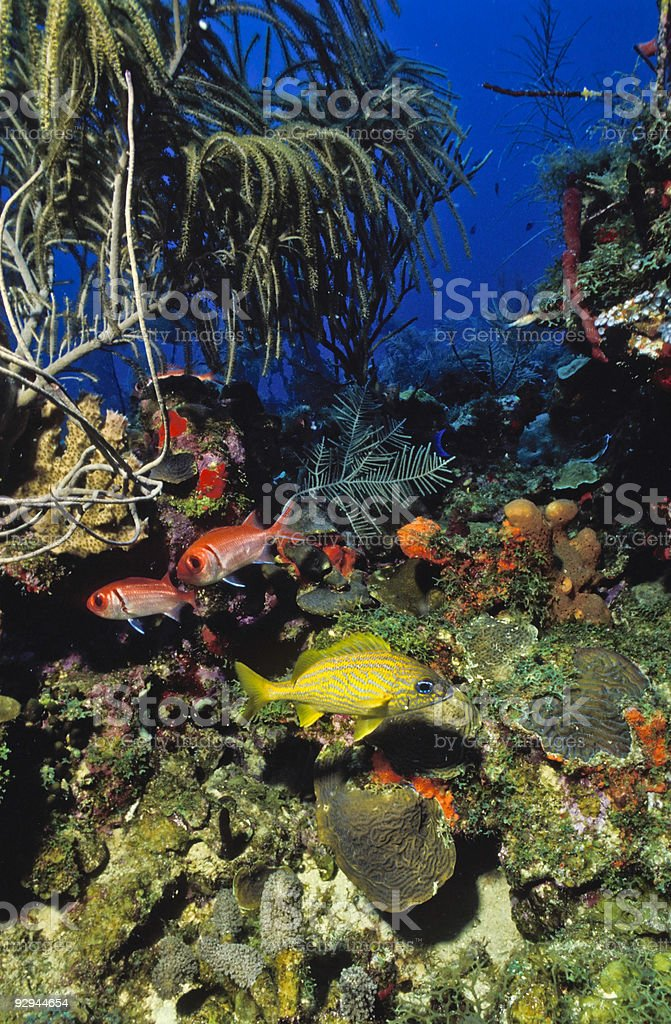 Reef off Nevis royalty-free stock photo