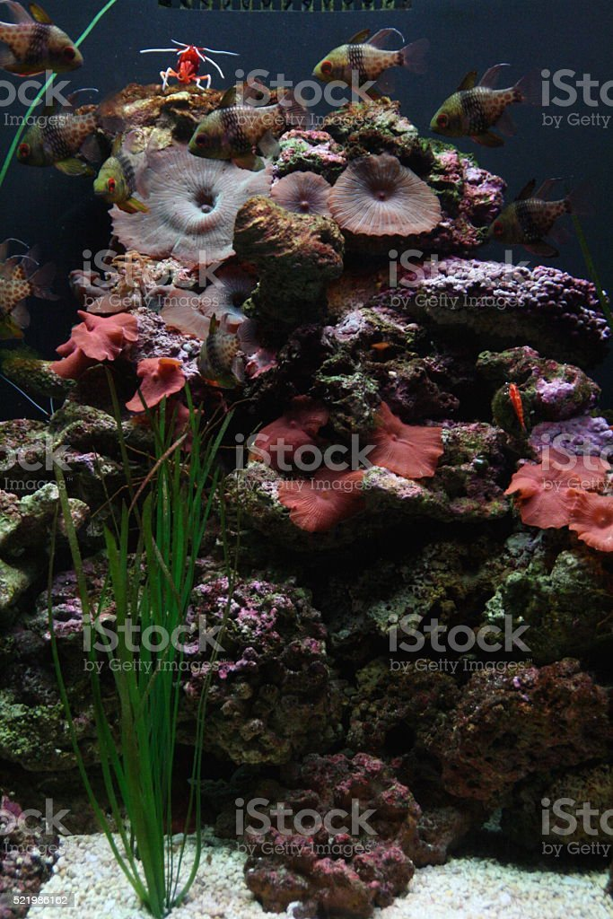 Reef stock photo